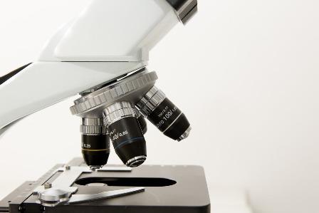 Badanie histopatologiczne płodu
